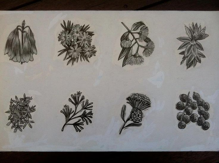 delicate flowers. Illustrations for a book used as page turners in a limited edition book on Australia. Printed and published in 2000