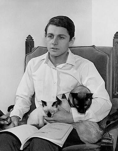 Here are two beautiful, popular Siamese kitties and their Human; , Burt Ward (aka 'Robin') from the Batman TV 1960s classic TV show.