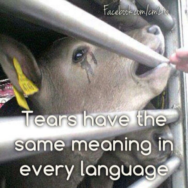 I cried lets go vegan! We have families and same to animals