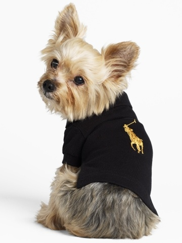 Ralph Lauren for your sporty Yorkie