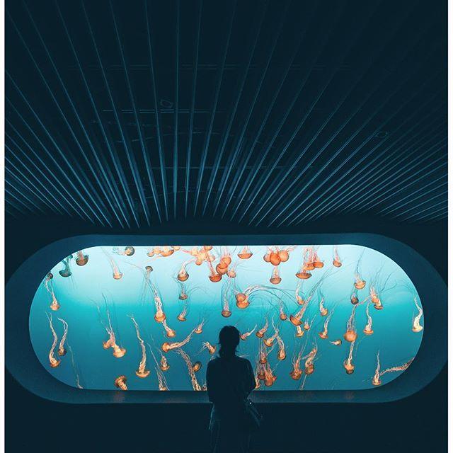 The 25 Best Monterey Bay Aquarium Ideas On Pinterest California Love Video Monterey Bay