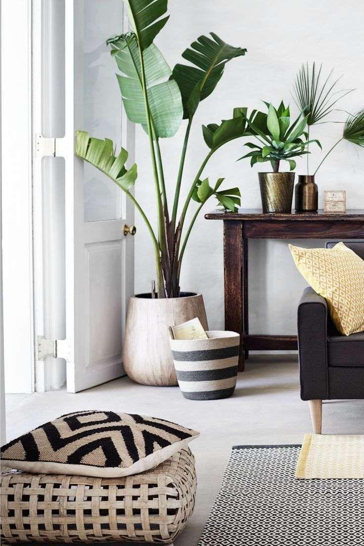 Piante Da Arredo Appartamento come arredare casa in estate: spunti di stile (con immagini
