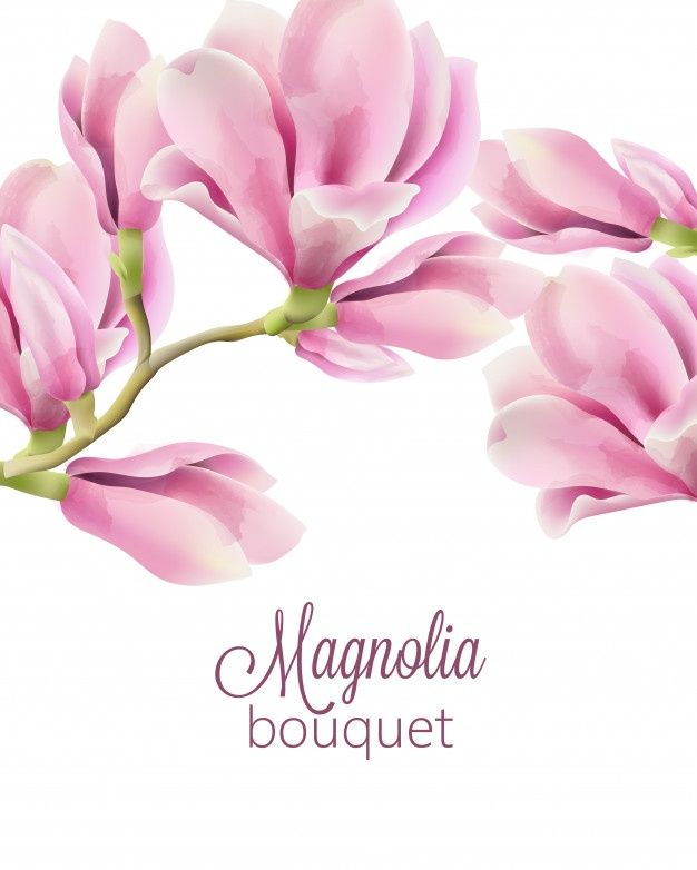 Download Watercolor With Spring Bouquet Of Magnolia Flowers For Free In 2020 Flower Illustration Magnolia Flower Watercolor Flowers