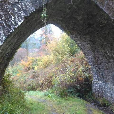 Glenbower Woods, Killeagh