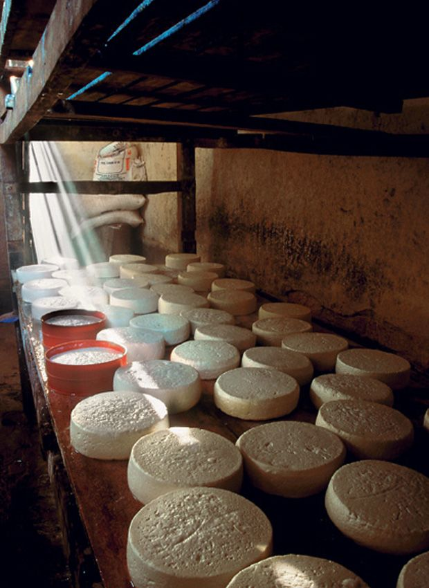 Produção de queijo, na roça tem!