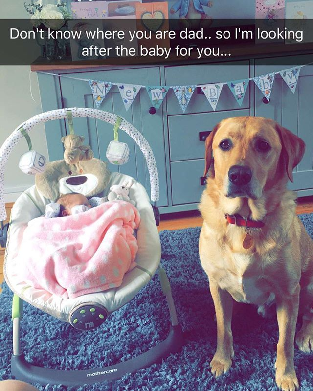 I pop out for 5 minutes and this is what i receive ❤ I Love My Family 🏠👨👩👧🐶 #Baby #babiesofinstagram #dad #mum #dad #mum #pregnant #pregnancy #expecting #family #firstbaby #parenthood #blessed #exciting #easterbaby #babynews #babybump #babies #babyshower #future #myworld #lifejourney #girl #babygirl #precious #Labrador #dog #dogsofinstagram #evedeso #eventdesignsource - posted by Adam Campbell 🇬🇧 https://www.instagram.com/adcamfitness. See more Baby Shower Designs at…