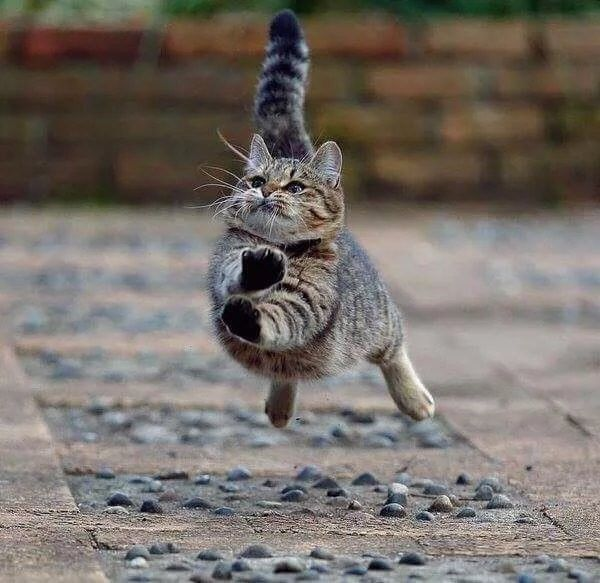 Karate Cat In 2020 Funny Animals Silly Animals Cute Cats