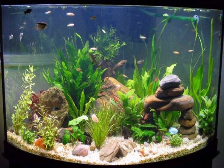 How to decorate your boring fish tank gardens modern for How to decorate fish tank