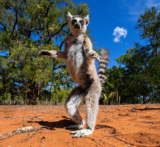 Good Besonderheiten Madagaskar ist die viertgr te Insel der Welt auf der Arten u