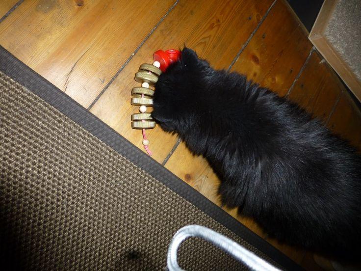 Katzen Fummelspielzeug für Leckerchen aus Saftflaschenkappen #diy #katzen #cat #toy