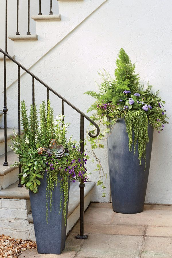 A planter in a faux-lead finish is a timeless choice, but the cylindrical shape of these tall fiberclay urns gives them a really clean feel. Having a different color or texture helps the color pop. Here, string of pearls creates plenty of textural drama and purple calibrachoa and blue ageratum add just the right dose of color.
