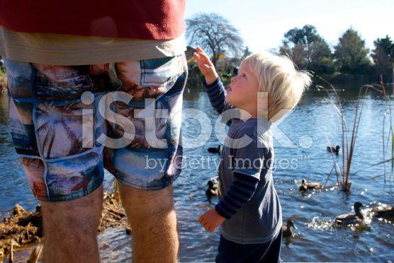 Child Feeding Ducks royalty-free stock photo