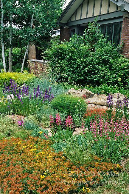 Garden Of Arun Das In Denver   Shone With Penstemons And Sedums. Photo By  Charles Mann