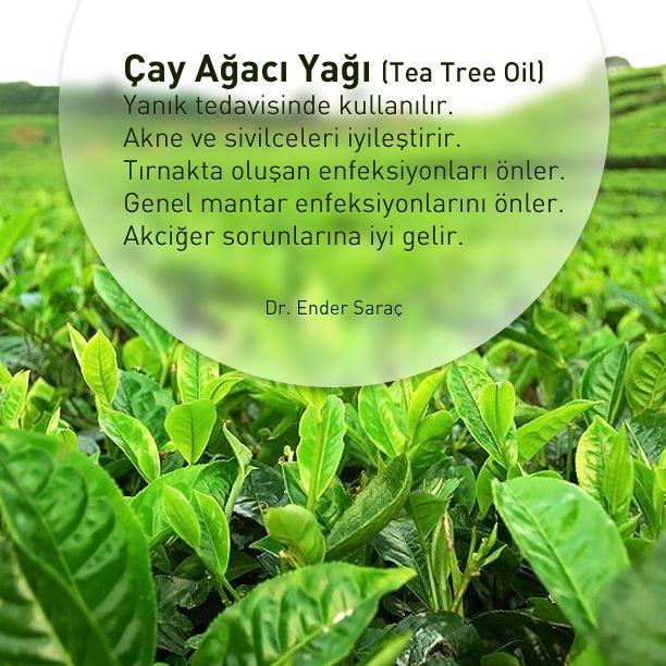 Çay Ağacı Yağı...