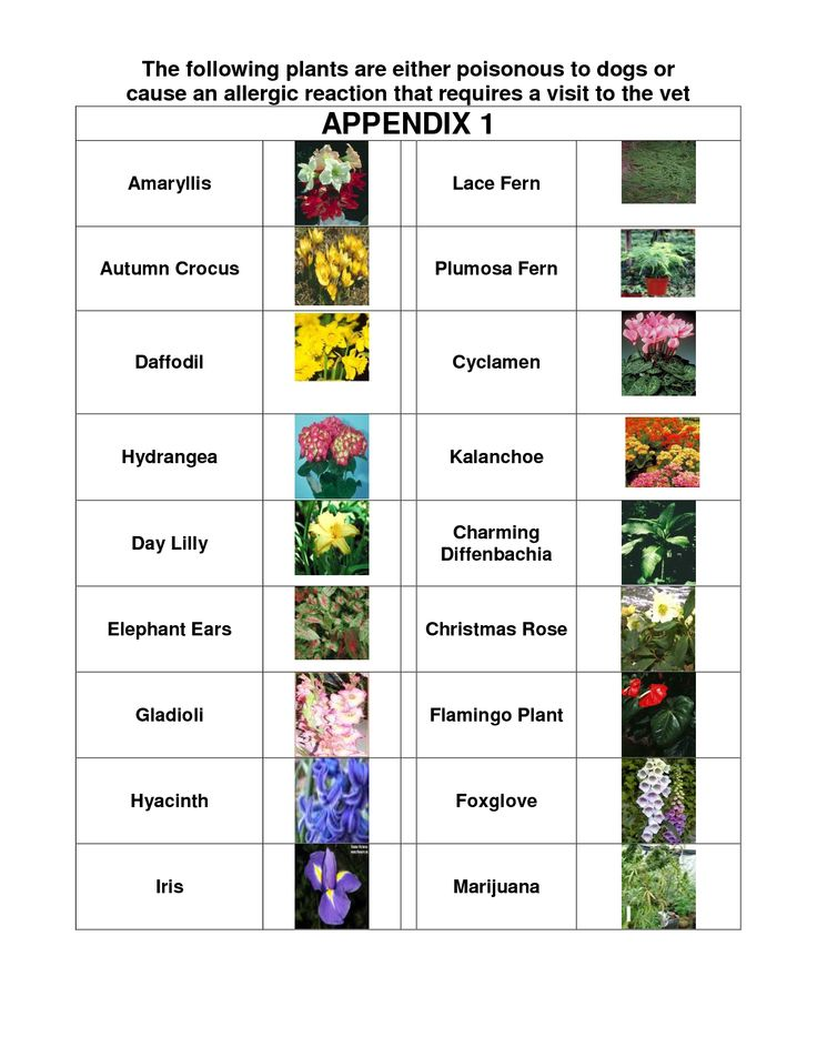 Plants That Are Poisonous To Dogs Google Search Pets