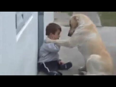 POWERFUL MESSAGE - Video courtesy: ANA MARTA VEGAS / Heart-warming moment gentle labrador Himalaya coaxes reluctant Down's Syndrome boy to play with him.  This is the heart-warming moment that a gentle dog befriends a young boy with Down's Syndrome and persuades the child to pla