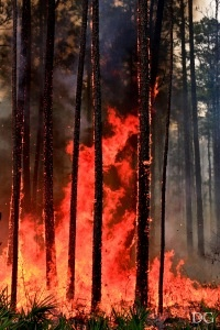 A non-profit source for consolidated wildland fire training information and events for Florida.