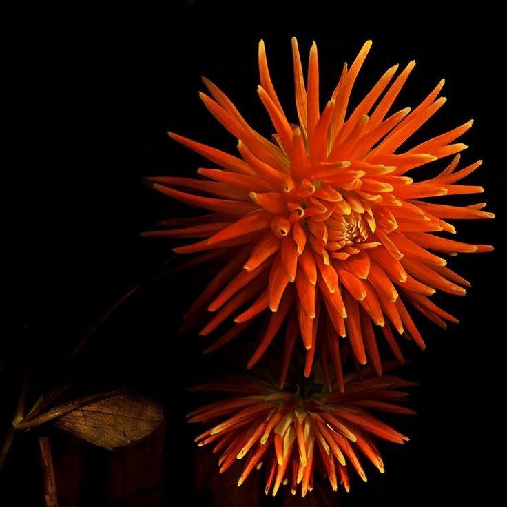 Lightpainted flower. by Nico van Dijk on 500px
