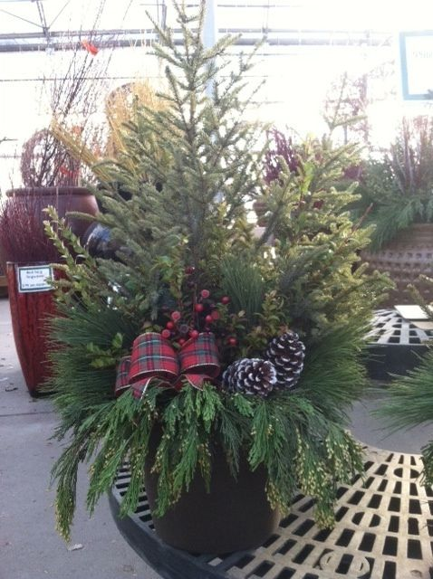 1000 Images About Christmas Spruce Tip Pots On Pinterest