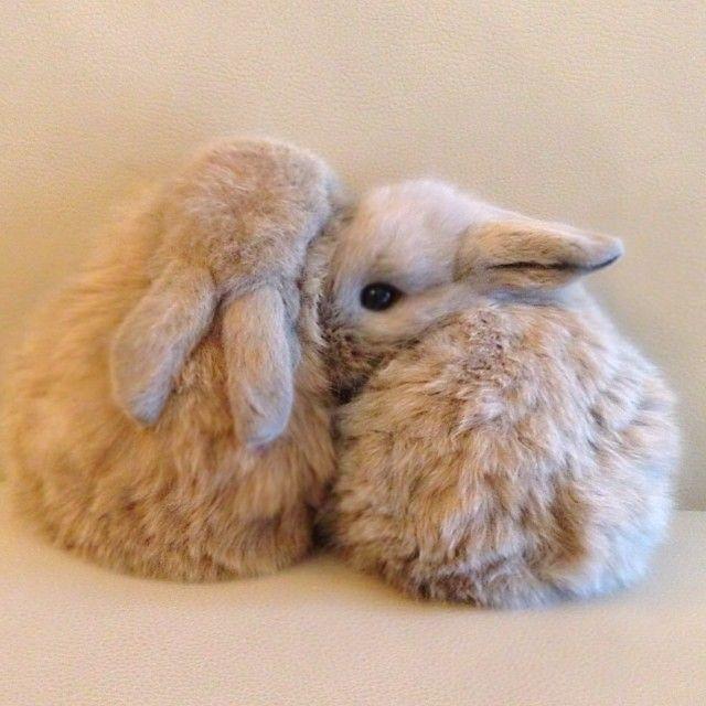 "@achirayada's photo: ""Oop!! Paparazzi !!  @bom_rabbits @bunny_foryou"""
