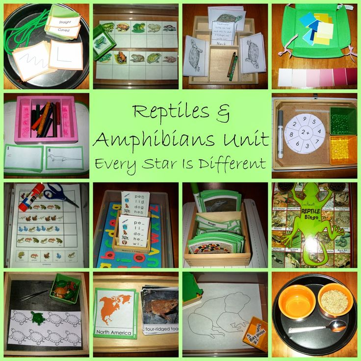 Montessori-inspired Amphibian Activities with Free Printables (Learn & Play Link Up) from Every Star Is Different