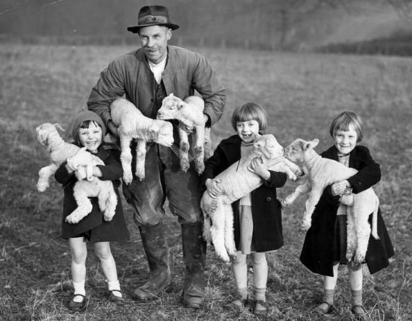 c1940: Evacuees from London to a Sussex farm are enchanted by the first lambs of the year on New Year's Day.   (Photo by Reg Speller/Getty Images)