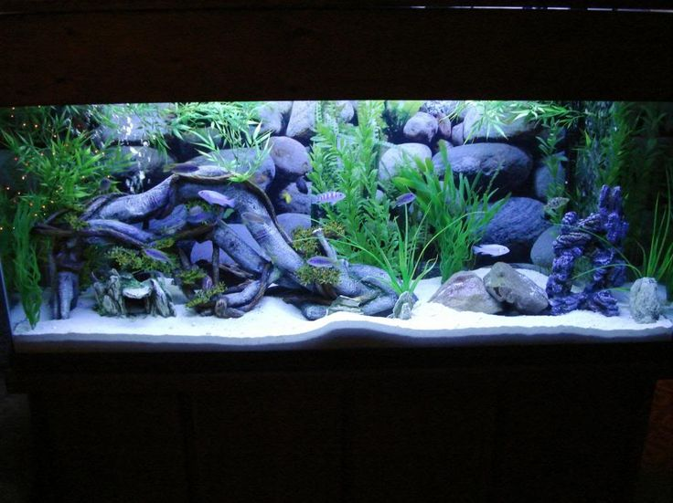 Click this image to show the full size version aquarium for African cichlid tank decoration