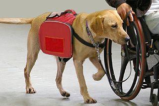 介助犬・聴導犬を広めよう募金 - Yahoo!ネット募金