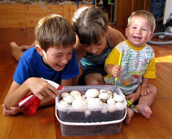 Как вырастить шампиньоны в домашних условиях