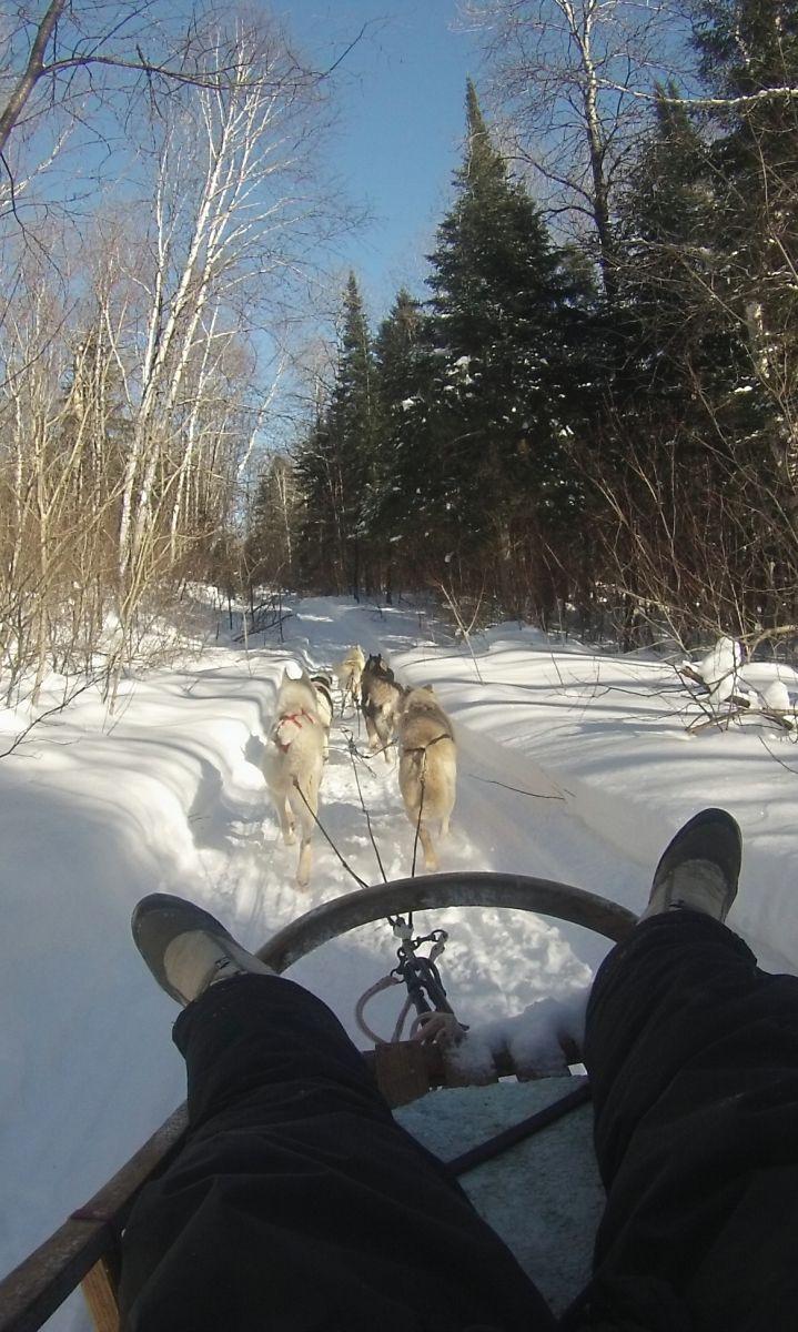 Trois semaines de WWOOFING chez une éleveuse de chiens de traîneau, à St Michel des Saints, au Québec
