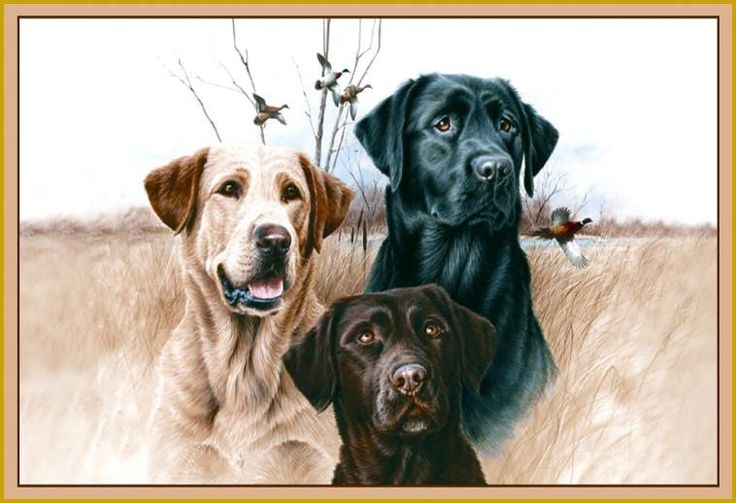Three Hunting Dogs 37 Quot X52 Quot Wilderness Labradors Wildlife