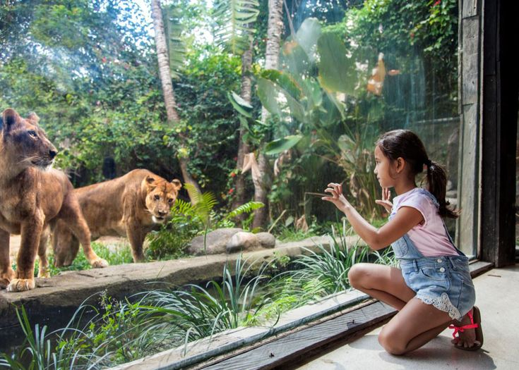 Bali Zoo Tickets Price 2018, Bali Zoo Park Packages Online Ticket Booking   Bali Zoo , locally referred to as 'Kebun Binatang Bali', is th...