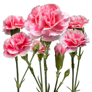 color i need for carnation tattoo