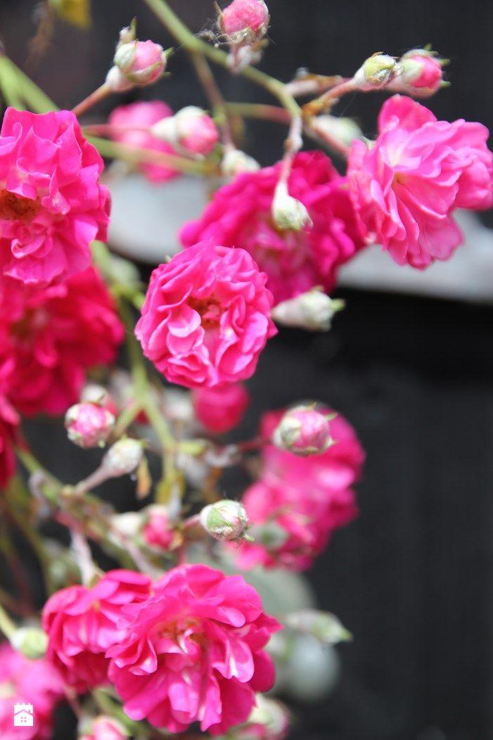 W ogrodzie. - zdjęcie od Agnieszka Kijowska - Ogród - Styl Tradycyjny - Agnieszka Kijowska garden, patio, garden diy, brick house, hammock, outdoor living, roses