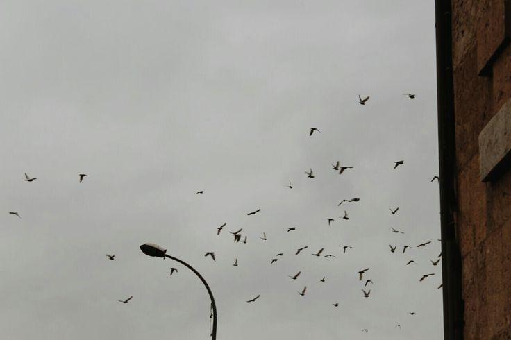 """""""Kuşlar nereye sığınır akşam olunca?"""""""