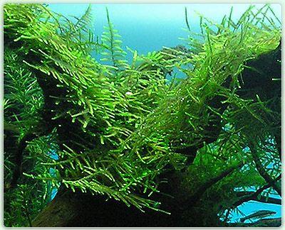 Die besten 25+ Süßwasseraquarium Ideen auf Pinterest Aquarium - deko fur aquarium selber machen
