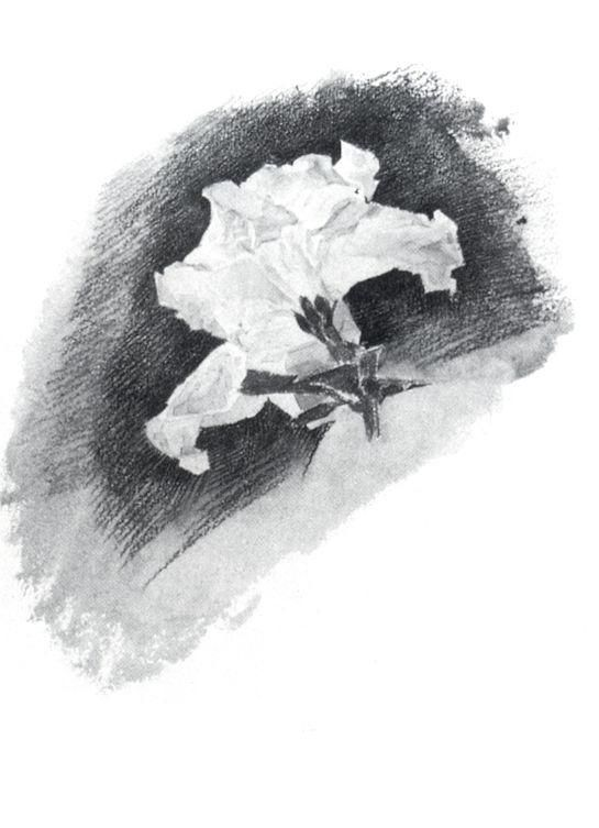 Михаил Врубель » Рисунки и наброски » Белая азалия без стебля. 1886-1887