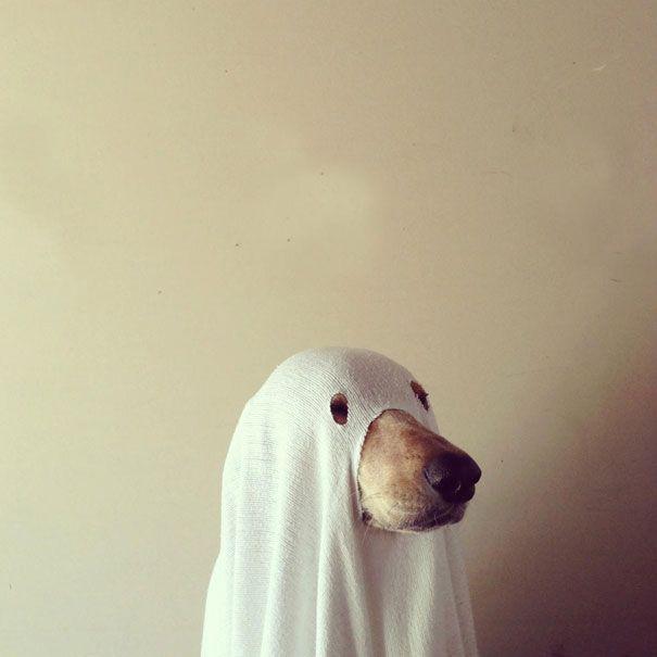 Déguisements Halloween pour animaux   deguisements halloween pour animaux chien fantome