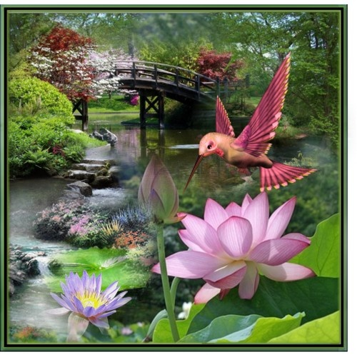 23 best images about koi ponds pond flowers love on for Koi fish pond lotus