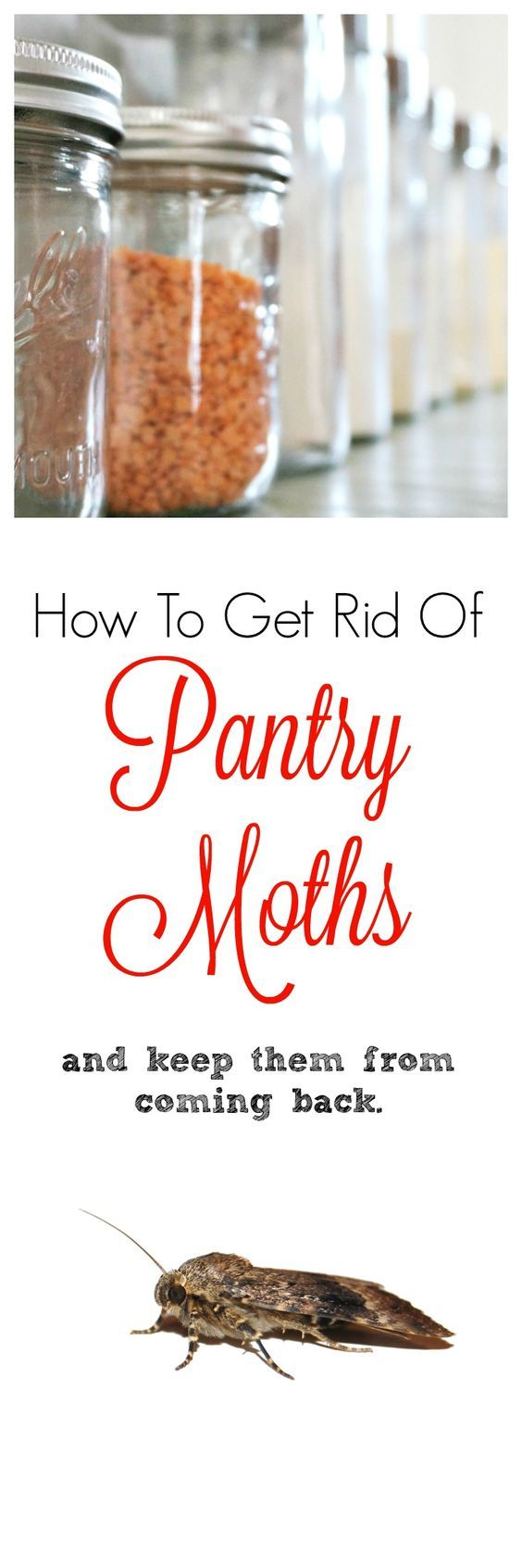 Pantry moths are disgusting! Here is how to get rid of them and keep them from coming back for good.