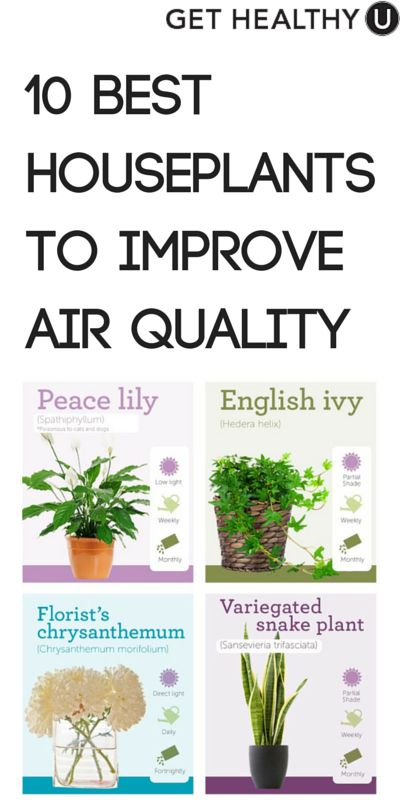 Best 20 indoor air quality ideas on pinterest best for Best plants to improve air quality