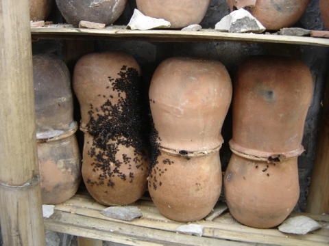 Clay pots Learning Center  S. mexicana traditional hives