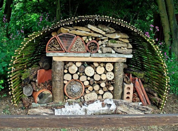 Who lives in Insect Hotels:  Wasps: cuckoo wasps, parasitic wasps and many more species...  Dragonflies, beetles, lacewings, ladybirds. moth...
