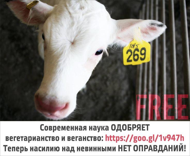 Официальные позиции медицинских и диетологических организаций относительно вегетарианства и веганства: http://veg.1bb.ru/viewtopic.php?id=13#p29