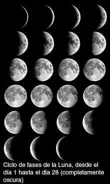 Montaje de fotografías de la Luna cada noche durante un ciclo de 28 días.