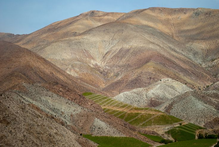 https://flic.kr/p/SsXDP2 | Chile 69 | Elqui Valley and pisco vineyards.