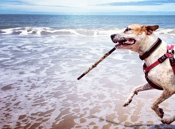 A dog's guide to Queensland's beaches - where all dogs can run free!  http://blog.queensland.com/2014/03/14/dog-friendly-beaches/ #thisisqueensland