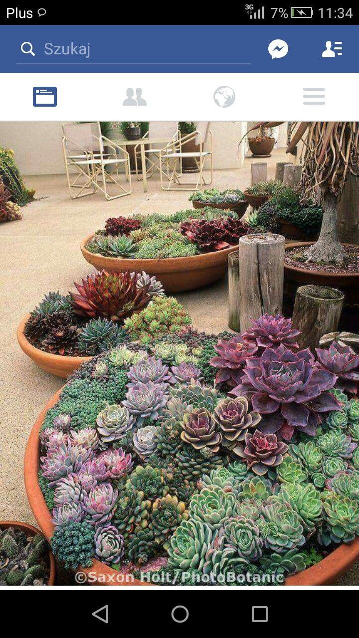 Pin by Ivana Vlkova on Ogród Plants, Succulents