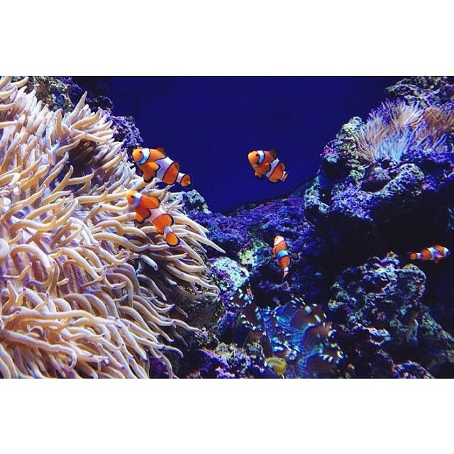 Theme Park | SEA Aquarium | Resorts World Sentosa