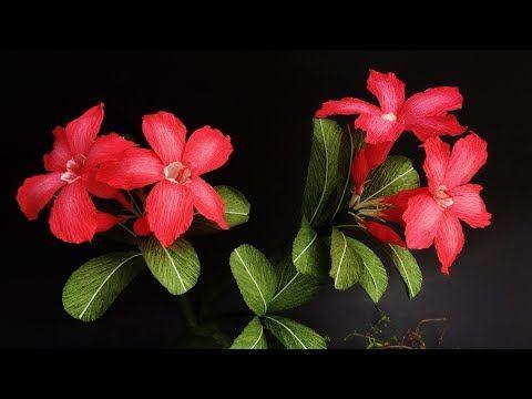 ABC TV | Как сделать бумажный цветок Adenium Obesum из крепированной бумаги - учебник по ремеслу - YouTube